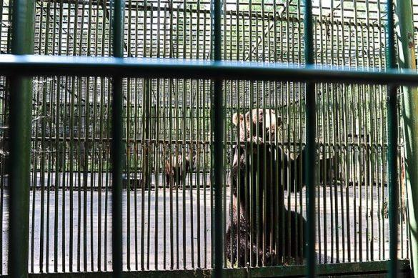 medved v kletki, Belorusija