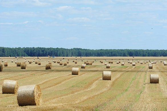 polje s senenimi balami