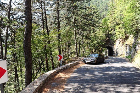vijugasta cesta skozi gozd