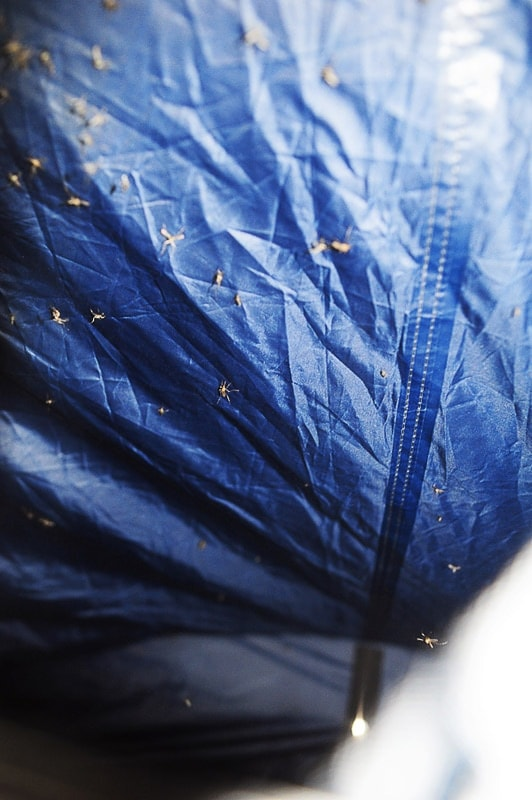 komarji na šotorskem platnu