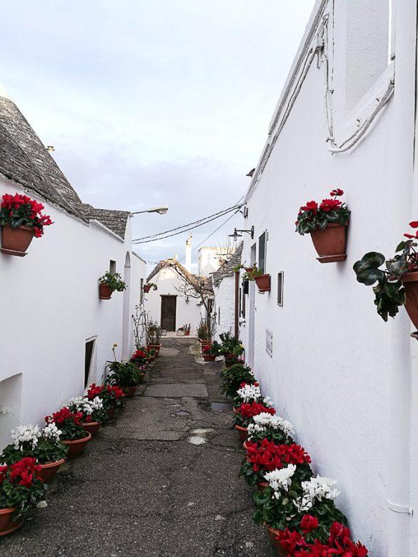 prazna ulica z rožami v alberobello