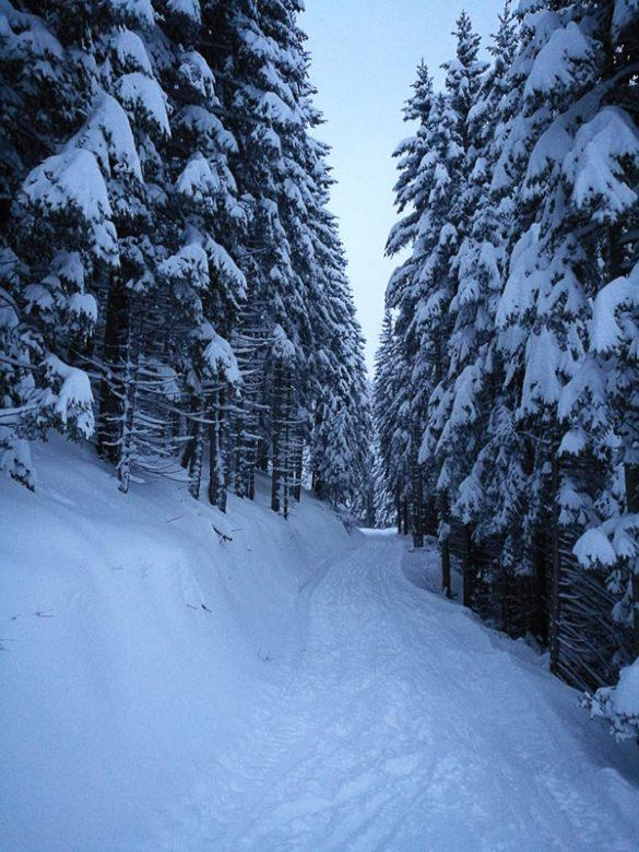 pot skozi zasnežen gozd