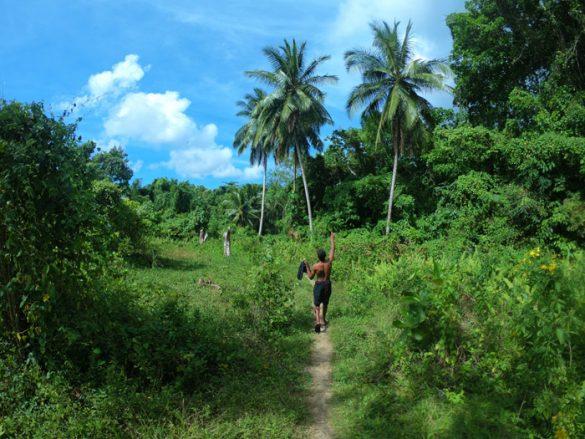palma, tropsko podnebje jamajka