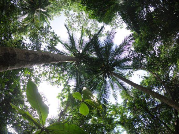 palme na jamajki
