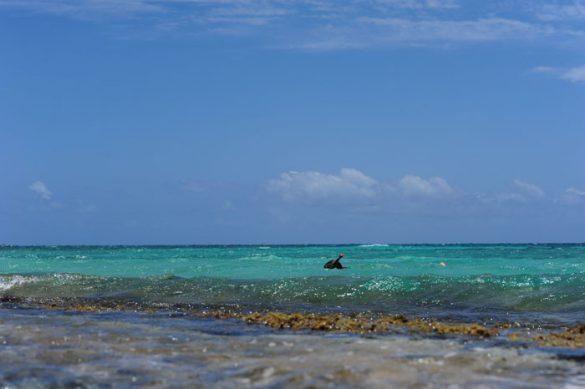 potapljač na Lime Cay