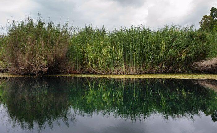 odsev trsja v reki