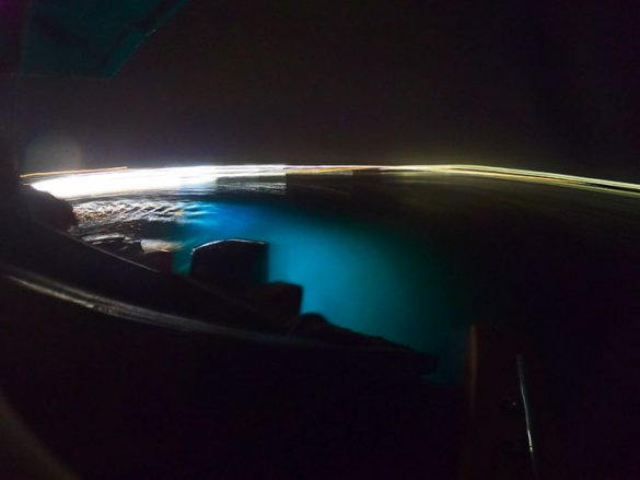 Bioluminiscenca na jamajki