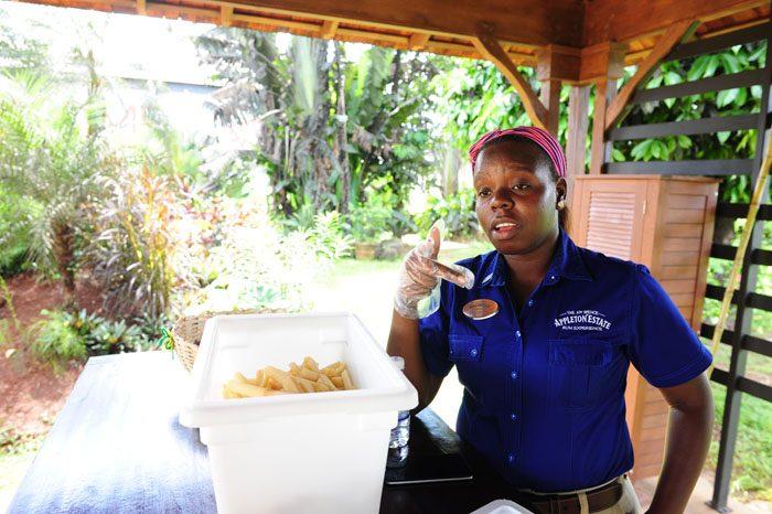 vodička nama kaže sladkorni trs, surovino za jamajški rum