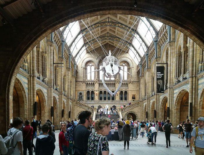 Vhodna avla natural history museum v Londonu