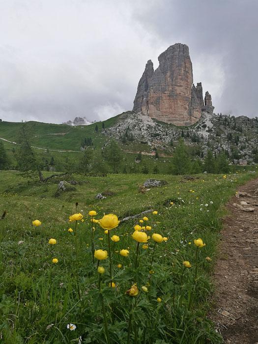 gorsko cvetje in Cinque Torri v Dolomitih