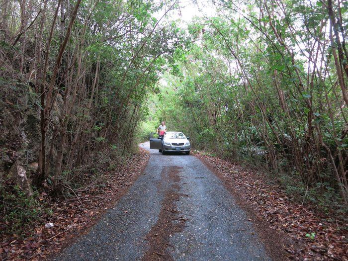 Avto na gozdni cesti na Jamajki