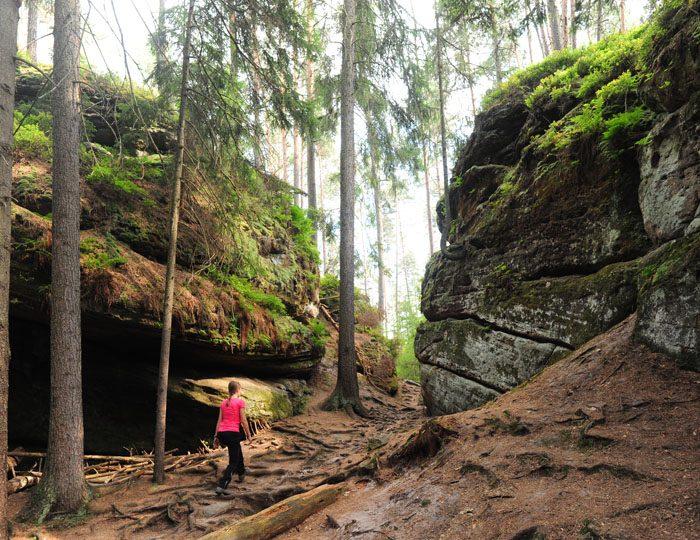 Ženska hodi po gozdu pri toulovcovy maštale