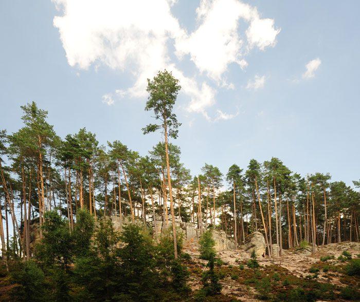 pogled na toulovcovy maštale, skalne strukture in peščenjaka v gozdu na češkem
