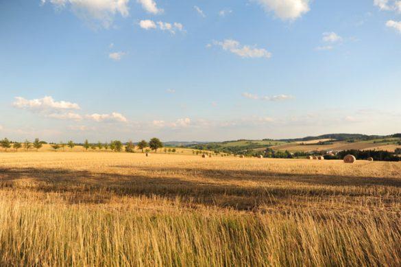 pšenično polje, češka pokrajina