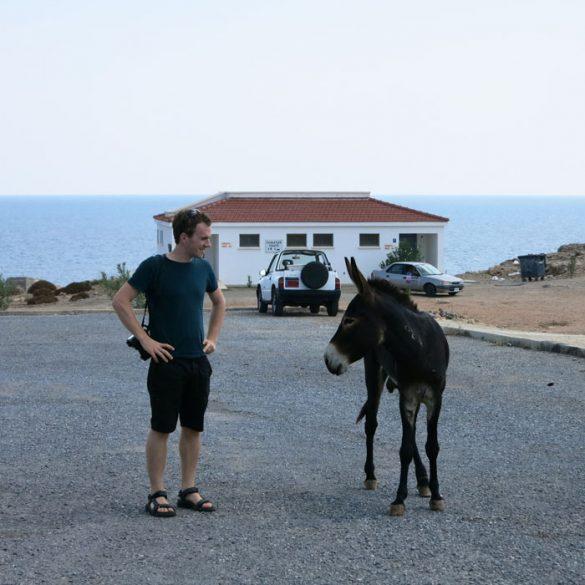 moški in osel na Rtu Apostola Andreja na Severnem Cipru