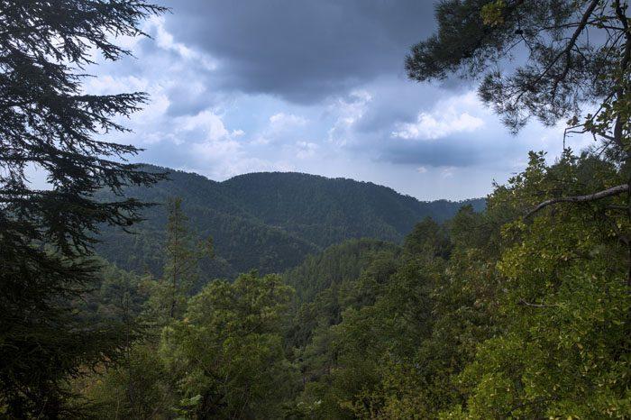gozd v gorovju Troodos, Ciper