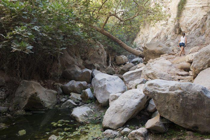 Avakas Gorge soteska na Cipru z malo vode in veliko zelenja
