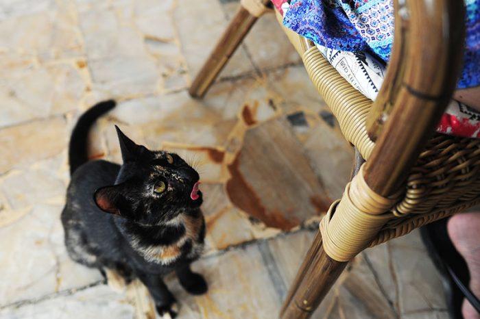 Potepuški maček v gostilni na Cipru