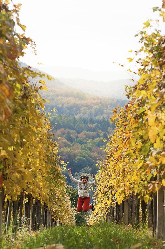 med jesenskimi vinogradi