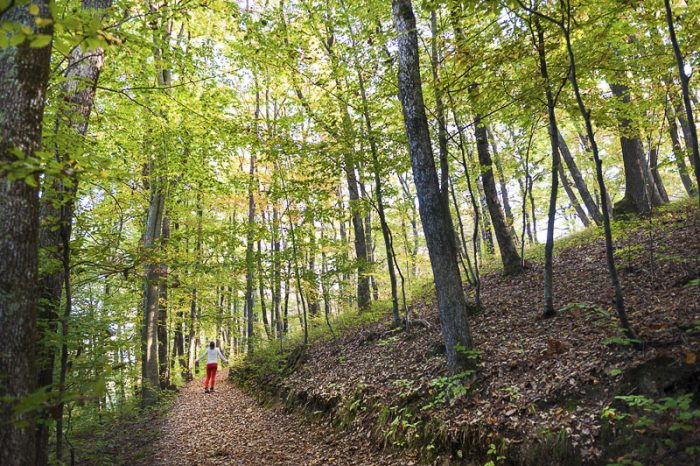 ženska na sprehodu v gozdu - gozd v jesenskih barvah