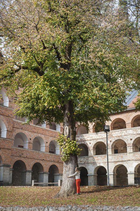 ženska pod drevesom na samostanskem dvorišču