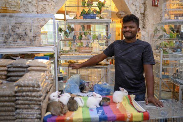 prodaja živali na tržnici v Dohi