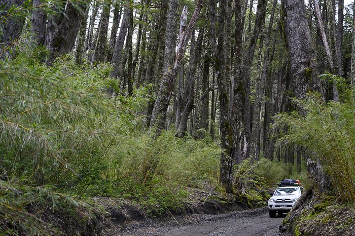 terenski avto na gozdni cesti