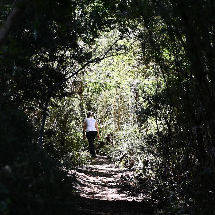 ženska hodi po gozdu v Nahuelbuta parku