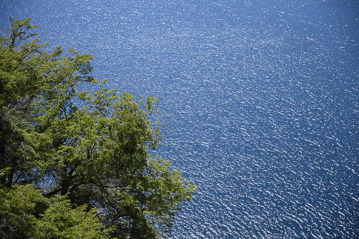 Drevo in jezero