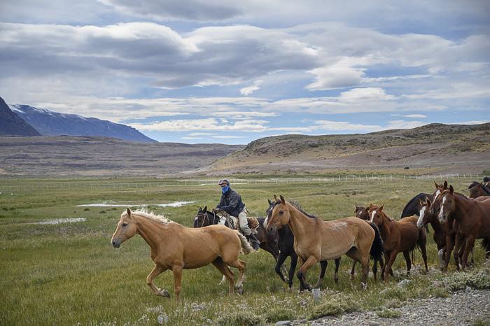 gaucho na konju v Argentini