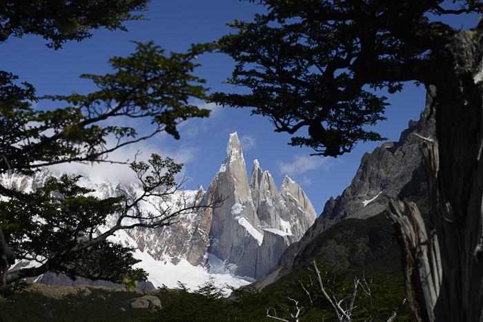 Cerro Torre skozi drevje