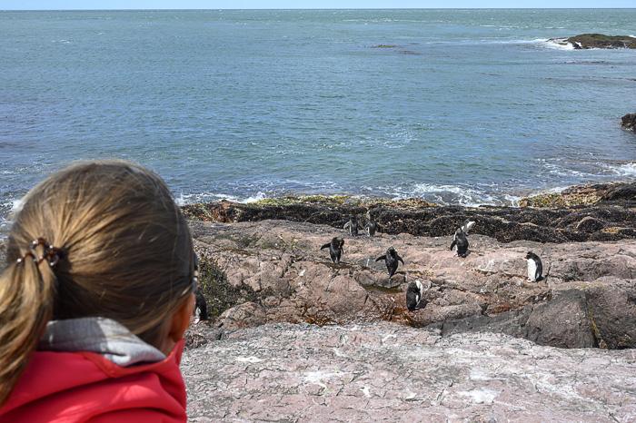 ženska gleda rockhopper pingvine na isla pinguino