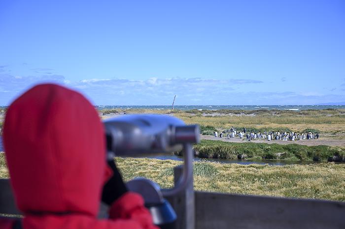 ženska gleda skozi daljnogled kraljeve pingvine