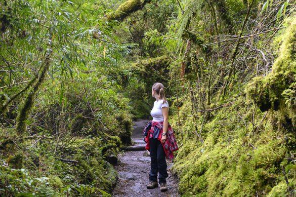 ženska v deževnem gozdu v Patagoniji