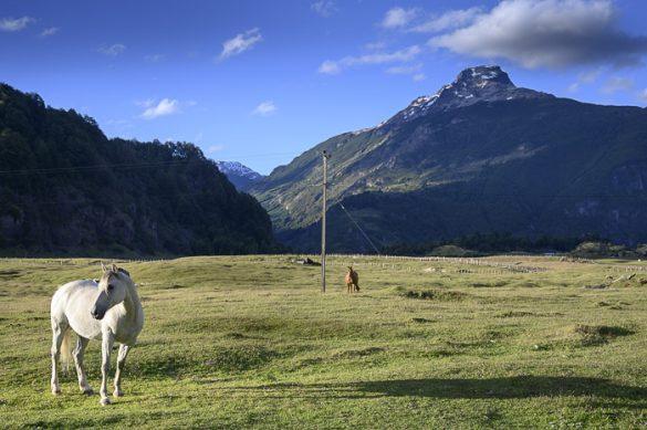 konj na pašniku, v ozadju gore. Čile
