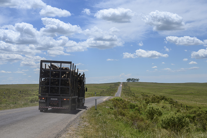 tovornjak na cesti sredi zelene pokrajine