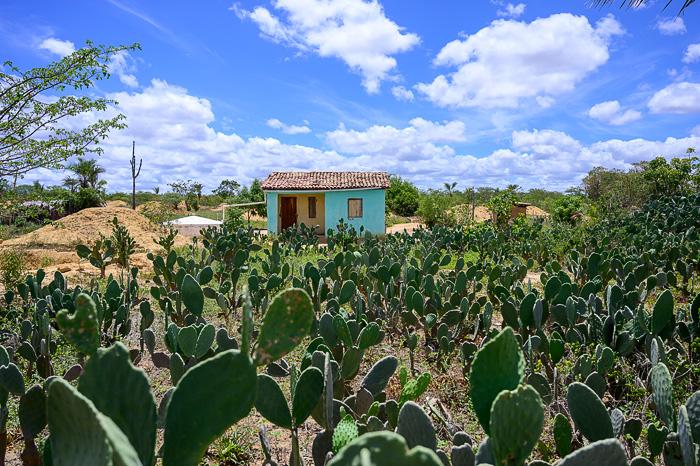 kmečka hiša in polje kaktusov v Braziliji