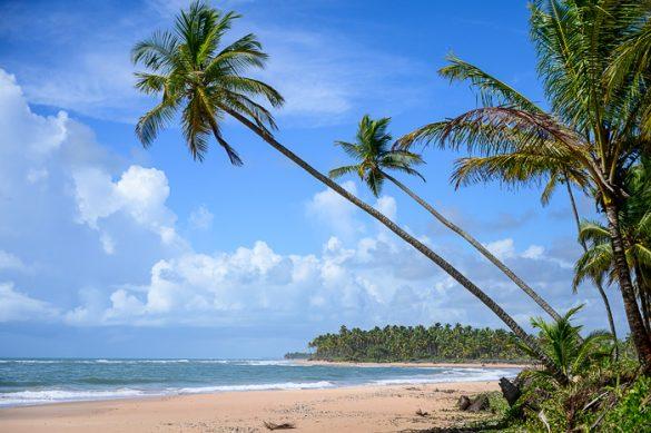 tropska plaža s kokosovimi palmami v BRaziliji
