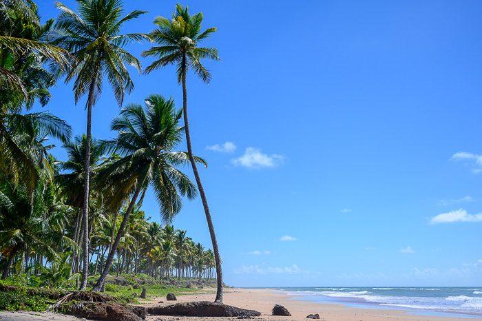 peščena plaža s palmami