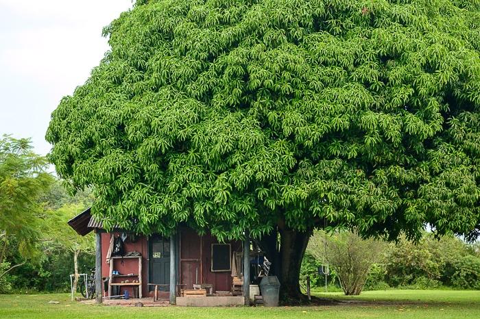 hiša pod drevesom