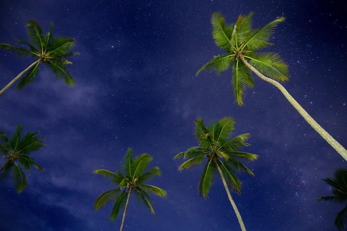 nočno nebo s palmami, brazilija