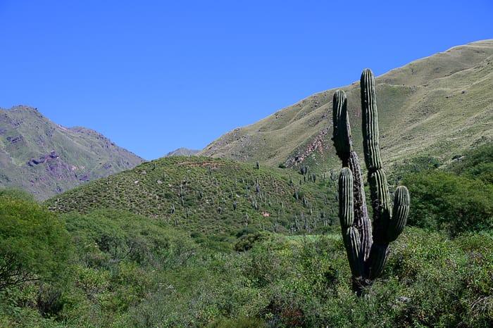 kaktus v južnoameriških gorah