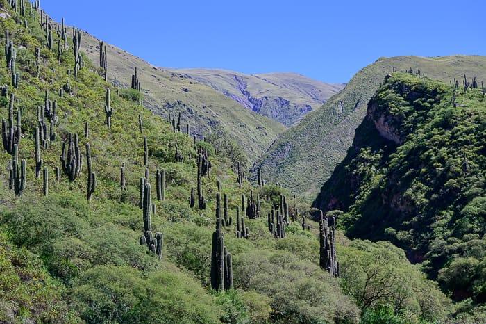 kaktusi v parku Los Cordones, Argentina