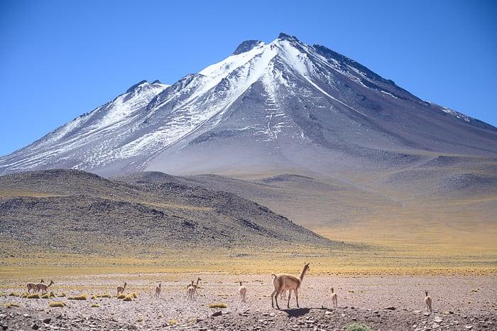 vulkan in vikunje v puščavi Atacama