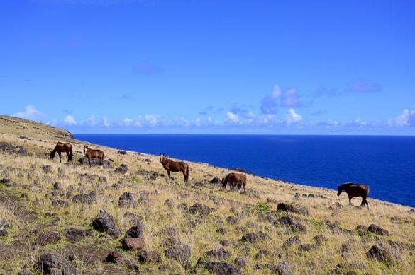 konji z velikonočnega otoka