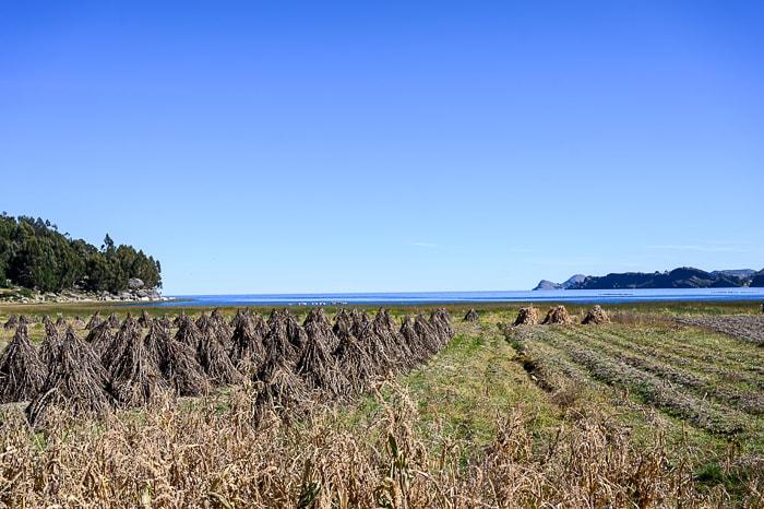 polja ob jezeru titicaca