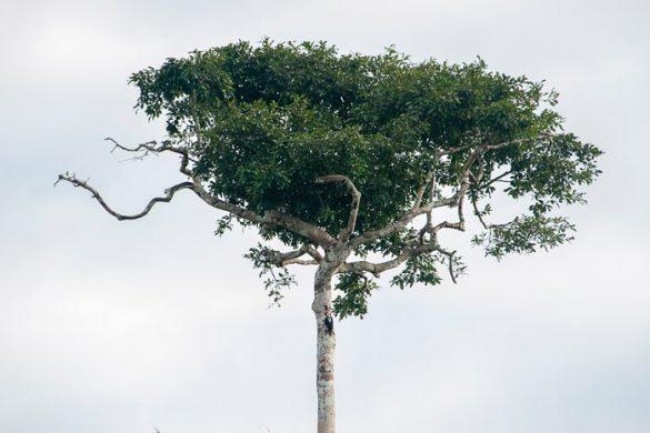 detelj na deblu drevesa
