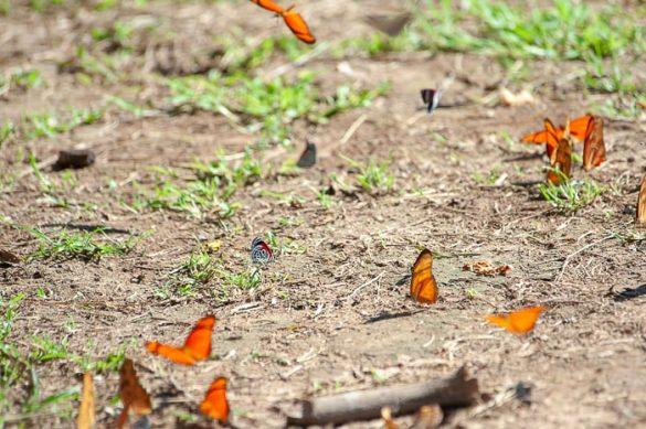 metulji na gozdnih tleh