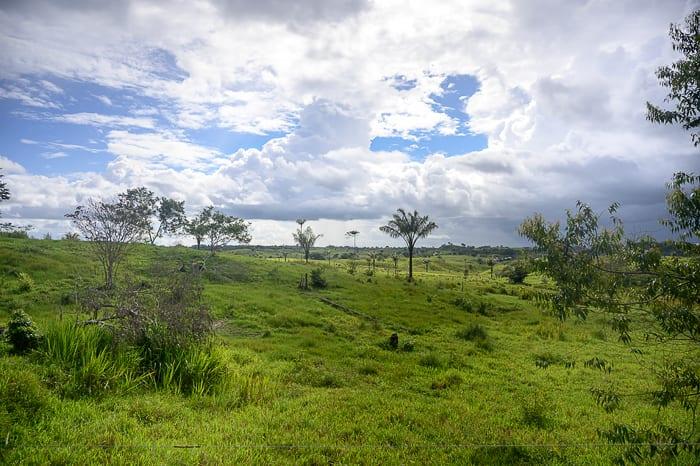 palme in savana, kolumbija