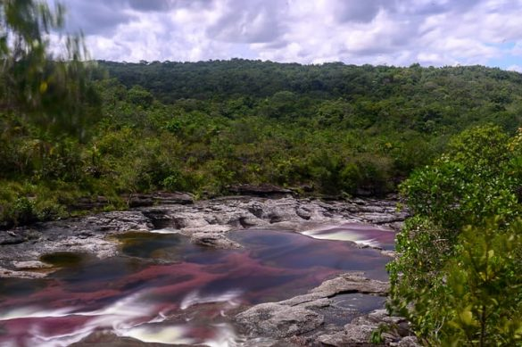 Roza reka, CañoCristales